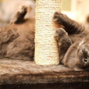 Когтеточка для кошек своими руками: обзор самых простых идей. 115 фото и видео мастер-класс изготовления когтеточек